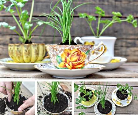 Tea cups become an herb garden